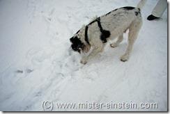 Schlittenfahren Jan 2010 2010-01-31 092_bearbeitet-1
