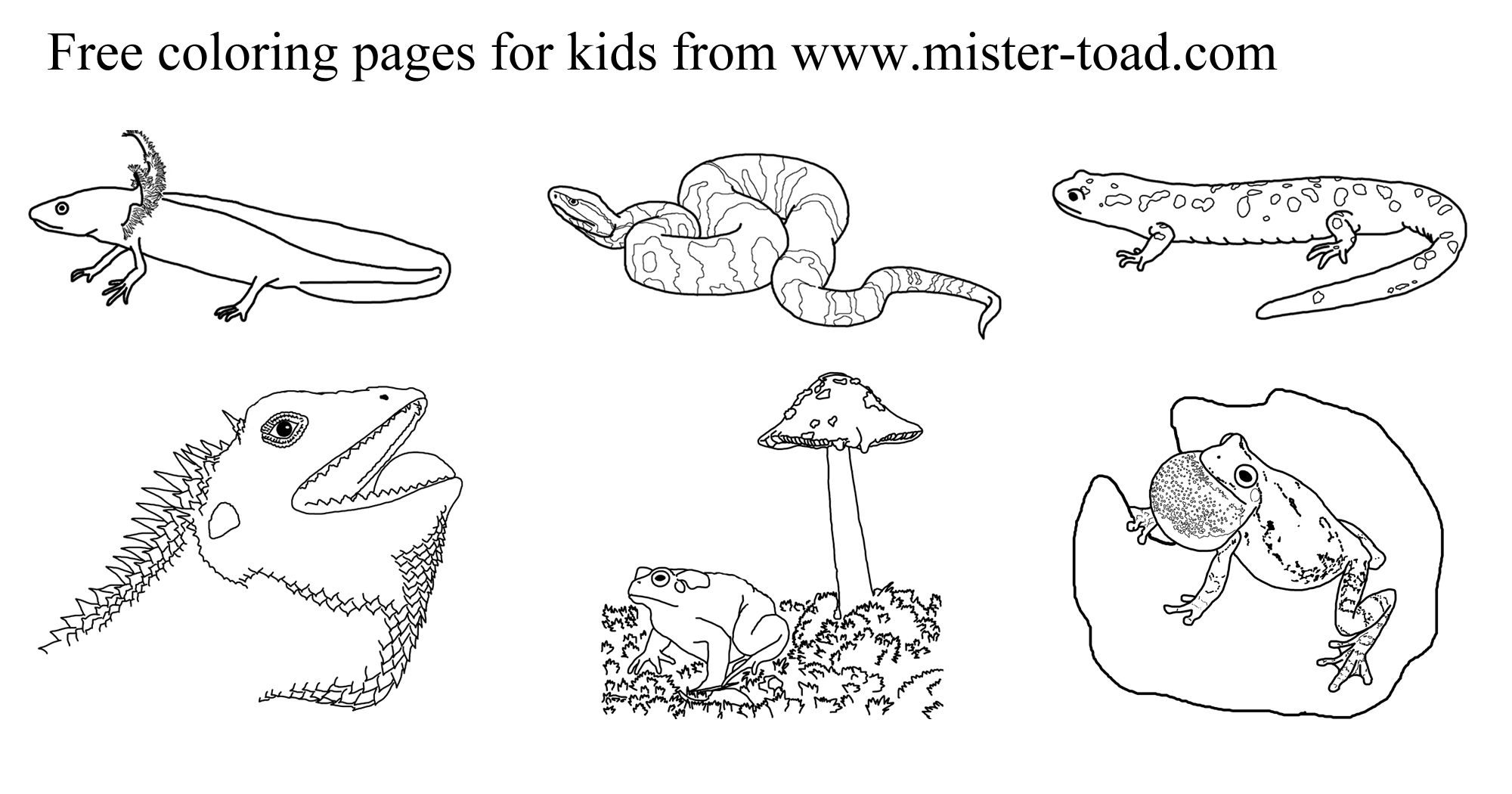 Amphibian Worksheets For Kindergarten Free Amphibian