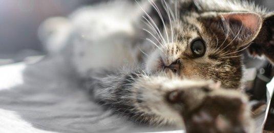 small-kitten