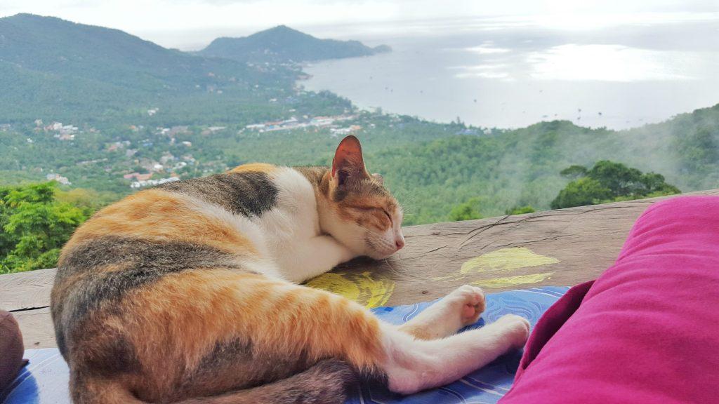 ... oh, wie süß, ein Kätzchen.... :)