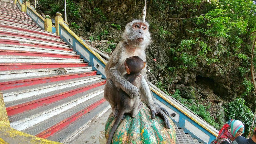 """Auf der Treppe zur Höhle sind überall Affen. Ein wenig wirkt das wie """"Planet der Affen"""" nur in Echt. :)"""