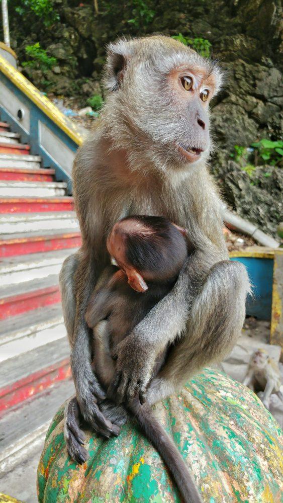 Wirklich süß, wie die Mutter ihr Baby beschützt. Hier sieht man auch, warum die Affen uns am nächsten sind.