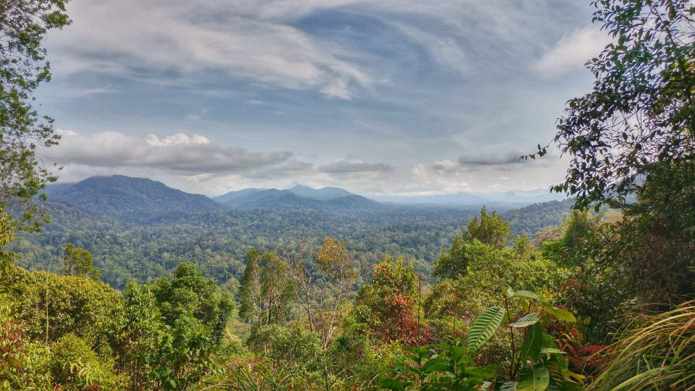 Was für ein toller Blick. Ein Blick in den riesigen Nationalpark von Malaysia. 80% davon dürfen von Menschenhand nicht verändert bzw. dort gesiedelt werden. Es gibt dort Wildelefanten, Tiger, Löwen…. Ein spannender Moment, wenn man dort hinblickt und das weiß.