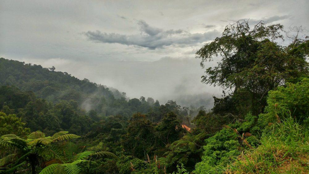 In den Cameron Highlands blieb ich nur eine Nacht. Eigentlich hatte ich mir das ganz anders vorgestellt bzw. geplant. Ich bin in die Highlands gefahren, weil ich die berühmten Teeplantagen sehen wollte und was sah ich, Regen, nichts als Regen. :( Als ich am nächsten Tag dann wieder nach Kuala Lumpur gefahren bin, was war da?? Da war wieder schönes Wetter. Danke aber auch. :P