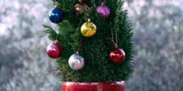 Στολίζουμε χριστουγεννιάτικο δέντρο σε γλάστρα