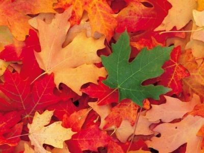 hojas de otoño1