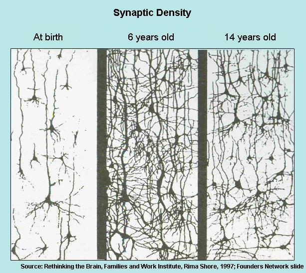 neurons-synapse-pruning