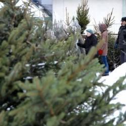 Nowe zasady oddawania drzewek świątecznych