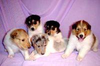 puppygallery1.jpg