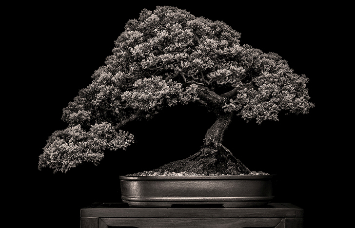 Misty Moon Bonsai Nursery