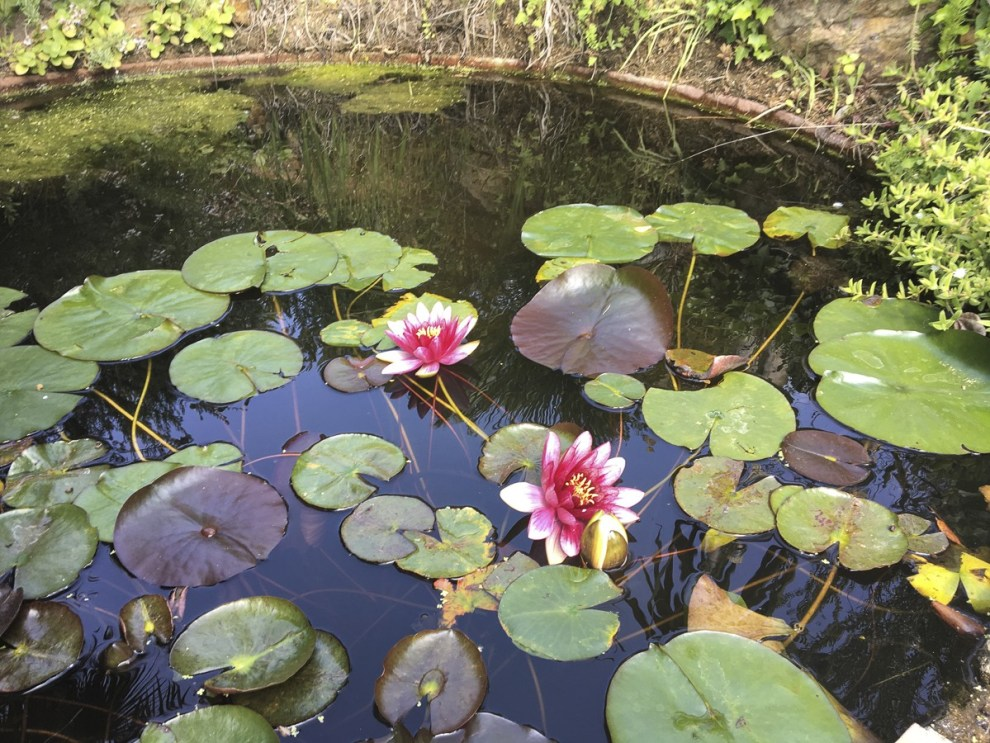 im Mittelmeergarten - Jardí Botànic Marimurtra