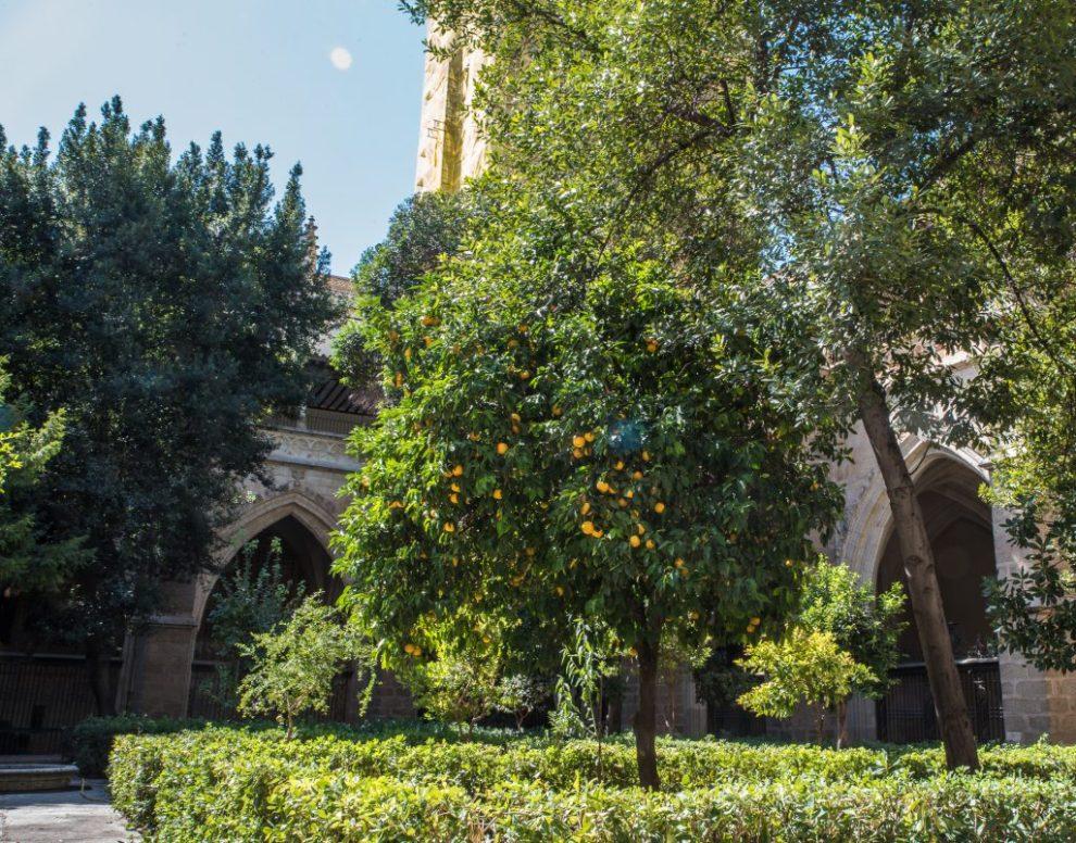 Orangengarten - Kathedrale von Toledo