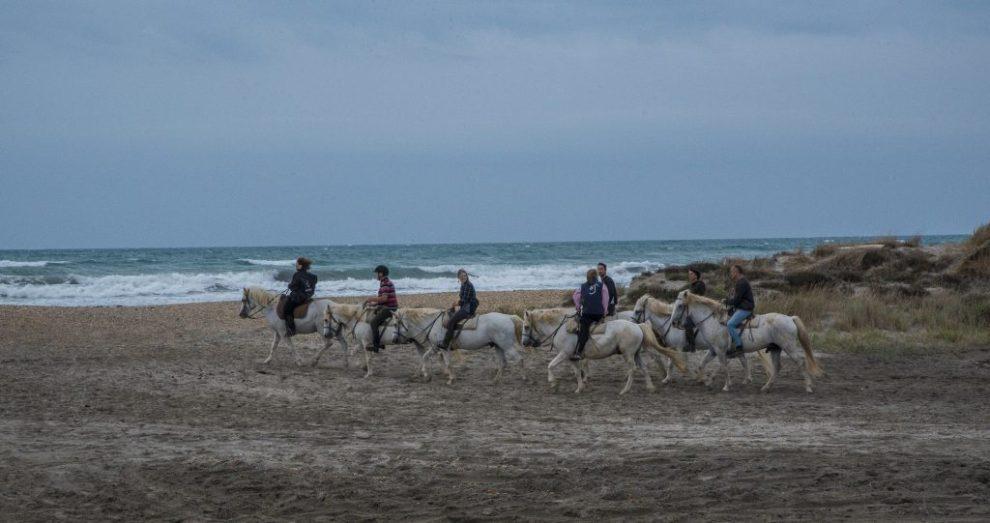 Reiter in der Camargue
