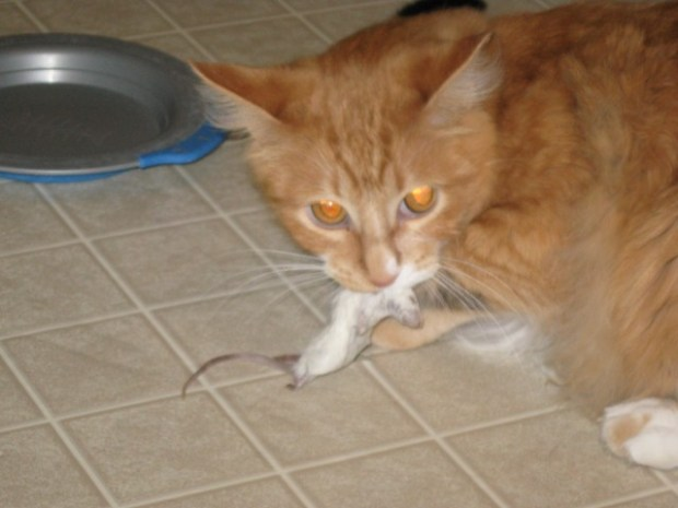 Wilbur holds a mouse