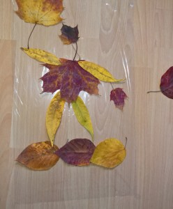 Linas Blätter auf Folie.