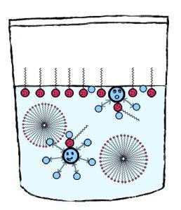 Die Tensid-Moleküle aus dem Spülmittel setzen sich auch an die Wasseroberfläche.