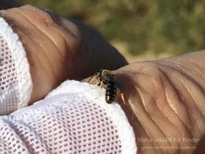 Eine kleine Biene auf der Hand