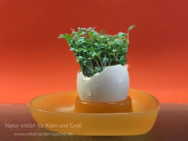 Kresse im Ei - Eine kleine Osterdeko