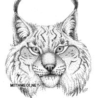 Stipple Lynx