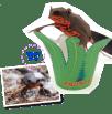 Papercraft imprimible y recortable de un tritón de vientre de fuego. Manualidades a Raudales.