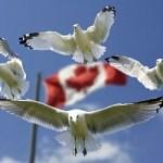 TTIP durch die Hintertür: Vor- und Nachteile von CETA für den deutschen Mittelstand