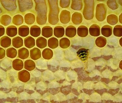 Bienenwachs plastikfrei Foto