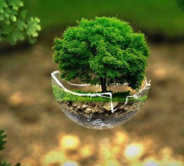 Xiaomi Italia foresta 1000 alberi