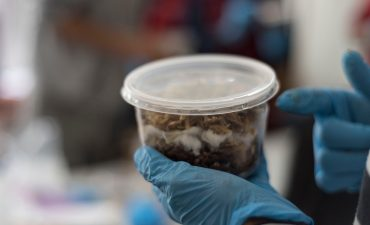 Learning to grow mushroom with Carlos Briones Pérez