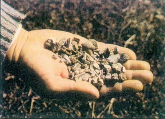 Μια χούφτα θρυμματισμένα κόκαλα, τα οποία ευρέθησαν το 1993 στον τόπο συντριβής των Γαλατών το 279 π.Χ στα «Κοκκάλια» και παραδόθηκαν στη ΙΔ΄ Εφορεία Αρχαιοτήτων Λαμίας. Πηγή φωτογραφίας.