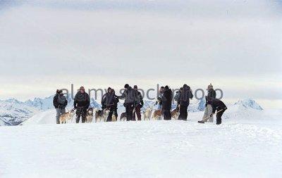 Τα σκυλιά ελκήθρου κατά τη διάρκεια εκπαίδευσης