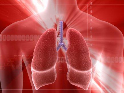 plamanii ,organul viu al copului uman