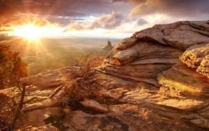 Ce a cauzat marile extinctii ale vietii