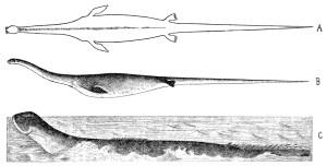 Sarpele de mare, unul din misterele adancurilor