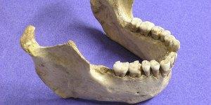 mandibula de Homo neanderthalensis