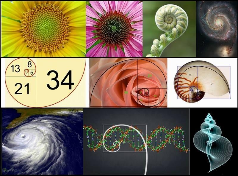 Rotation Geometry Real Life