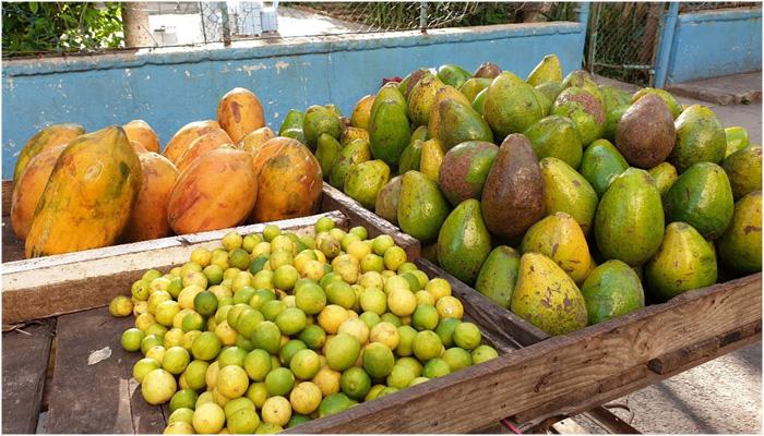Guayaba de Cuba