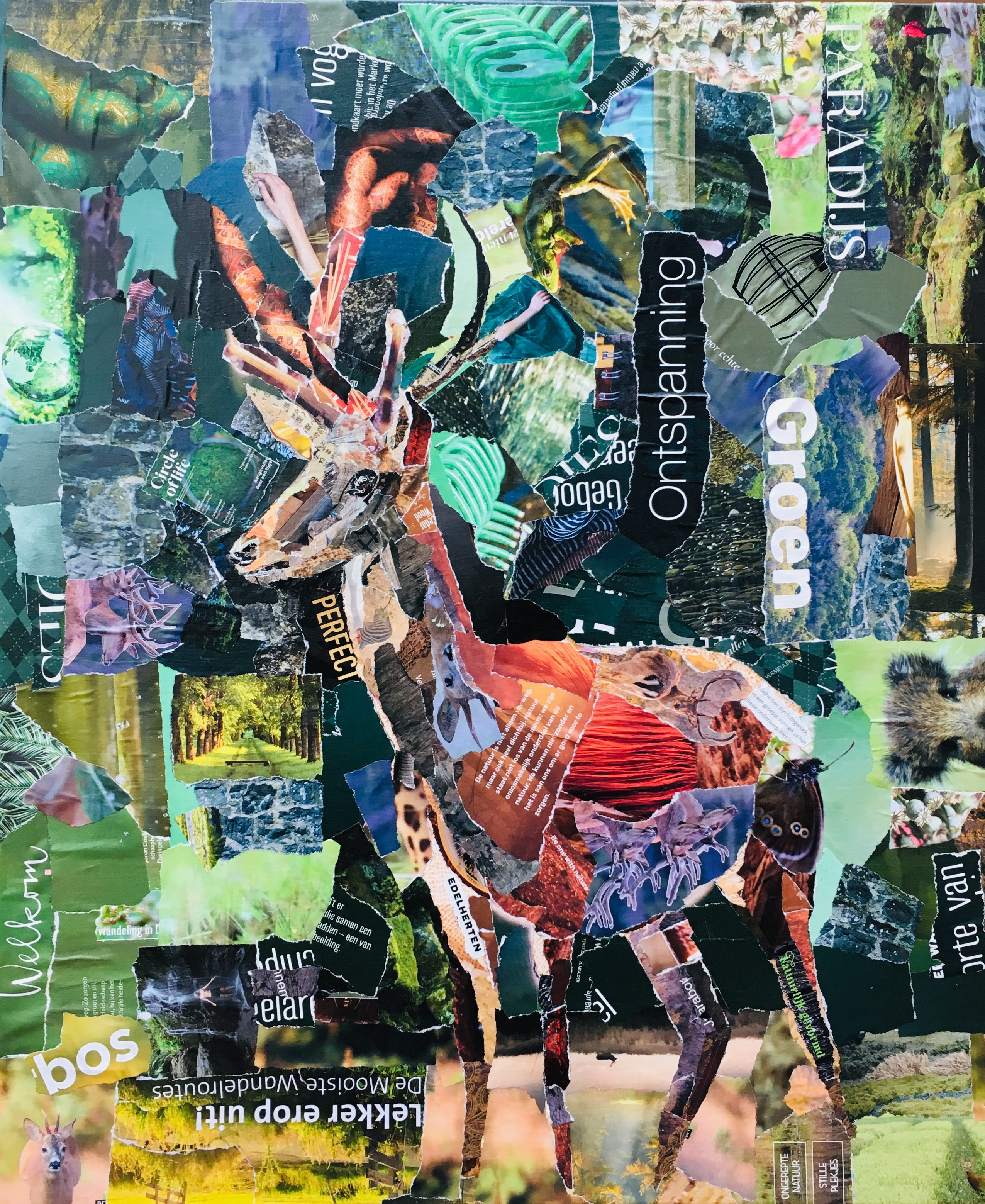 Edelhert - € 650,- Collage (50 x 60)