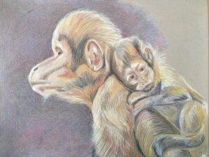 Geelborst kapucijnaapjes - €60,- / Kleurpotlood op papier 32 x 41