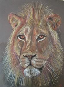 Leeuw - Verkocht / Kleurpotlood op papier 24 x 32