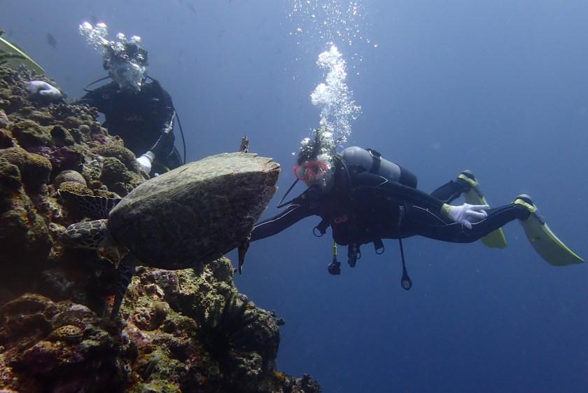 宮古島でウミガメと一緒に体験ダイビング
