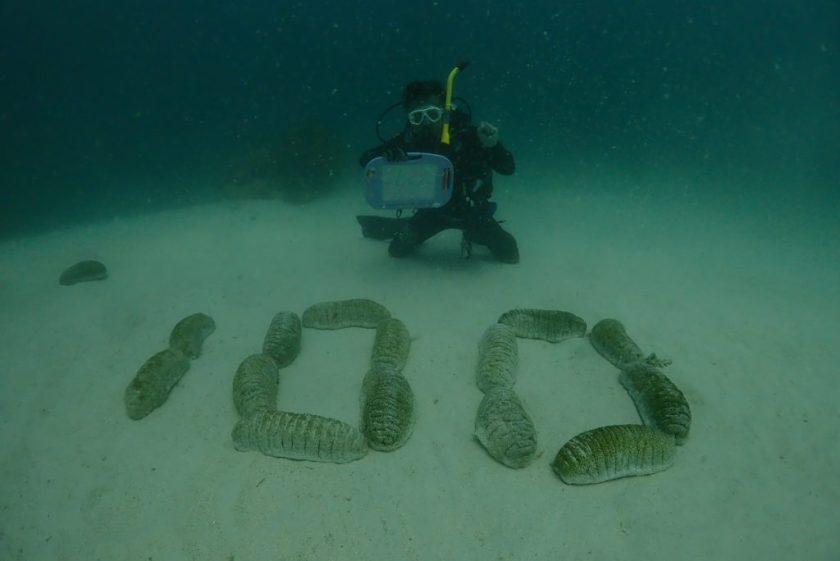 オーストラリア グレートバリアリーフ オーシャンクエスト 100本記念ダイブ