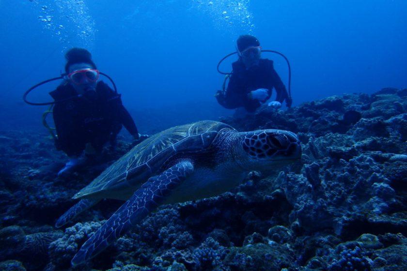 宮古島でアオウミガメと体験ダイビング
