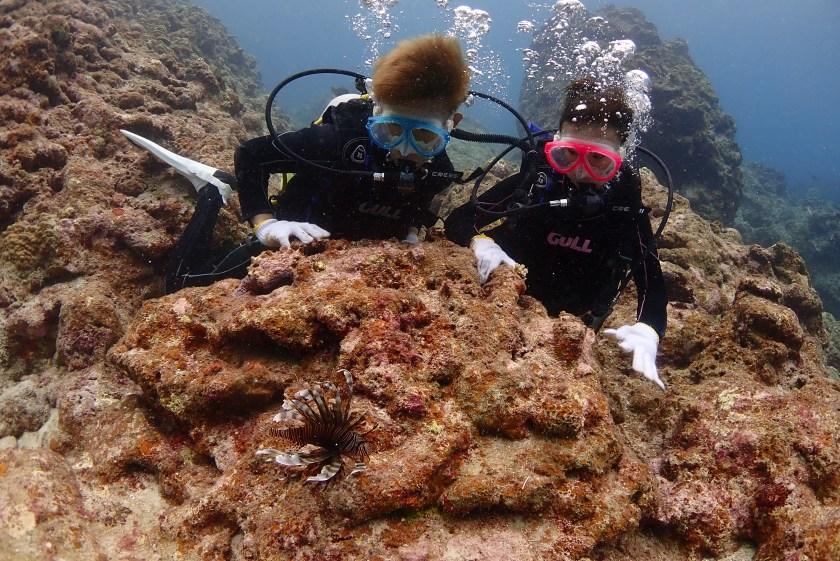 ハナミノカサゴと一緒に体験ダイビング