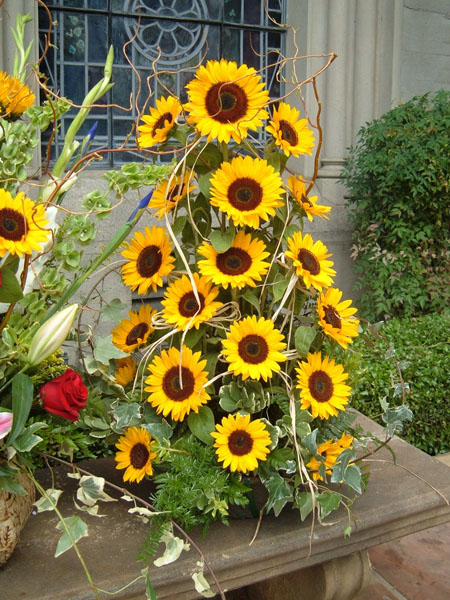 A Sunflower Tree - Perfection!