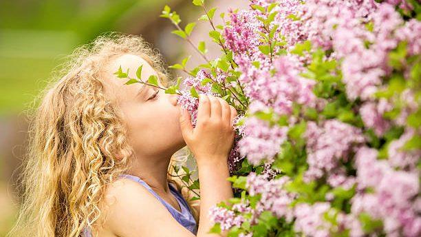 香氣迷人的丁香花