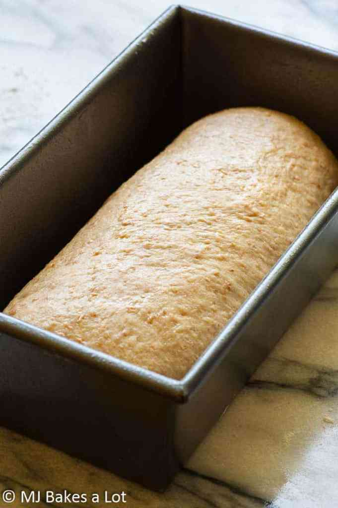 Malted wheat sandwich bread is easy to make by hand, bread machine, or stand mixer and is sure to become one of your favorites for sandwiches, toast, or just buttered and enjoyed as a wholesome treat. | mjbakesalot.com