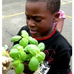 Pittsburgh Phillips K-5: A Celebration of our Herb Garden