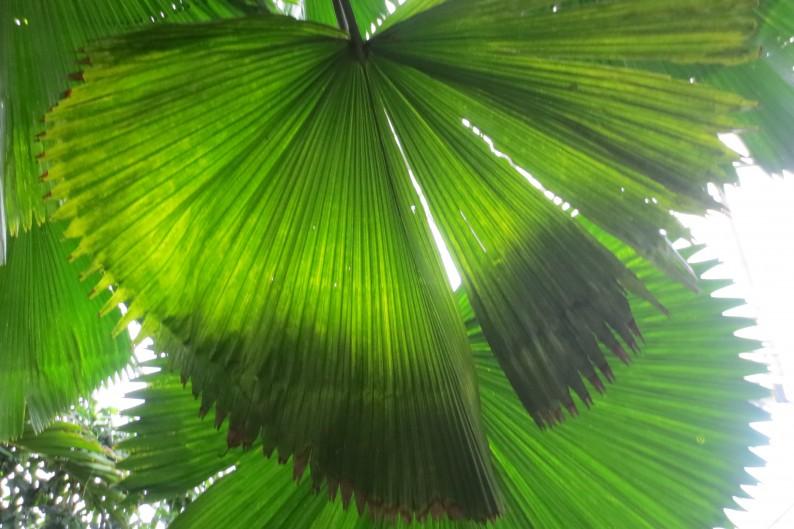 #exotic plants