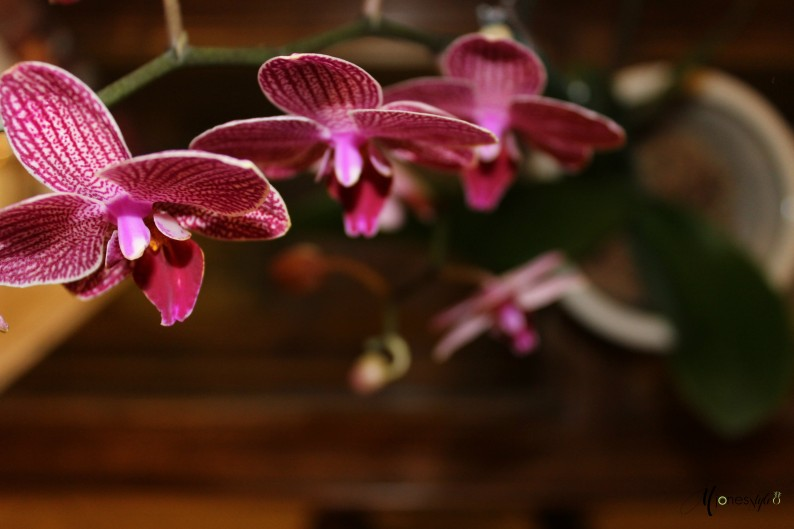 #orchid#tropical flowers