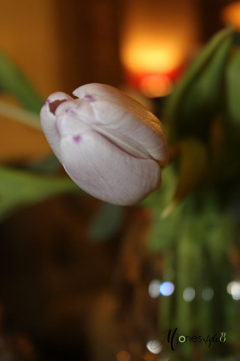 #tulips#lavendertulips